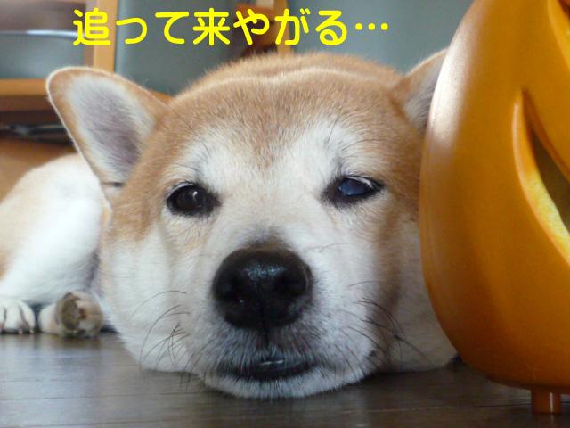 11日ブログ5.jpg
