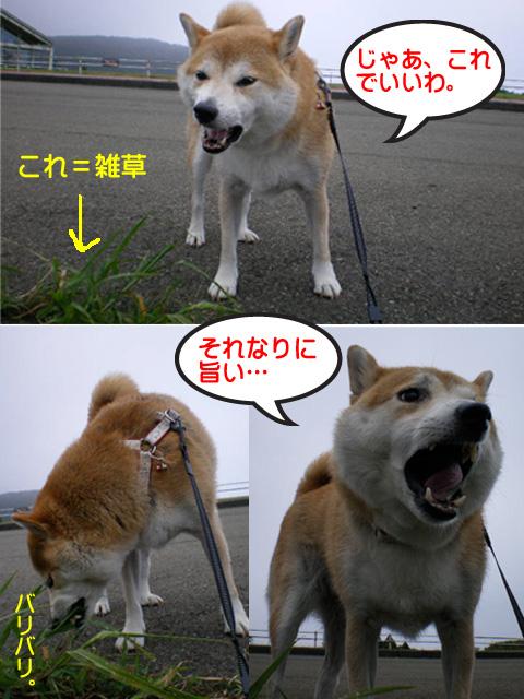 11日ブログ6.jpg