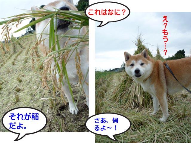 13日ブログ11.jpg