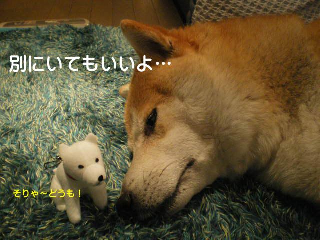 13日ブログ7.jpg