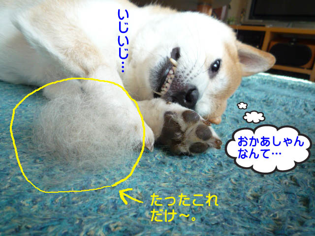 17日ブログ7.jpg