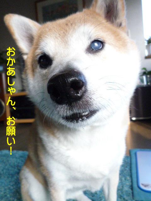 20日ブログ12.jpg