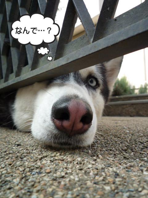 25日ブログ5.jpg