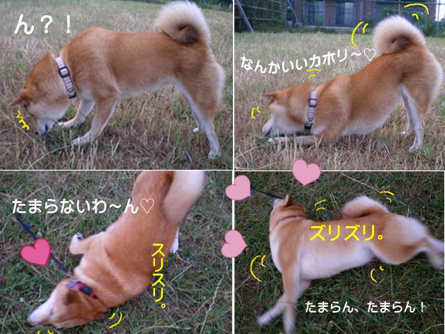 26日ブログ6.jpg