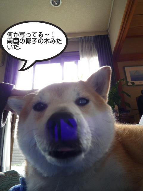 28日ブログ14.jpg