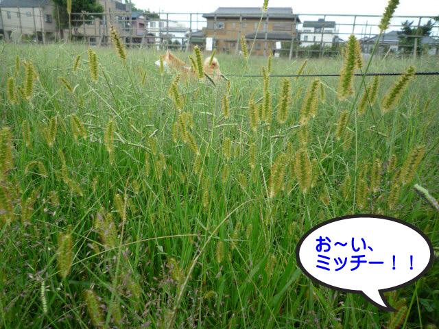 29日ブログ3.jpg