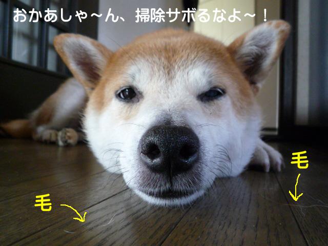 30日ブログ1.jpg