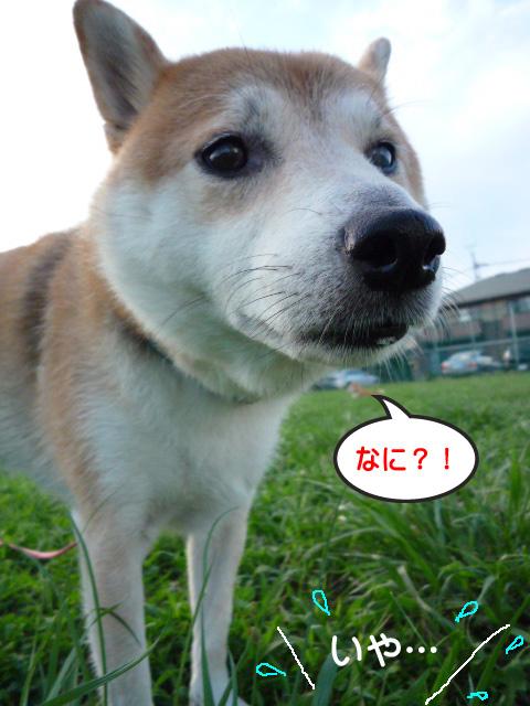 30日ブログ16.jpg