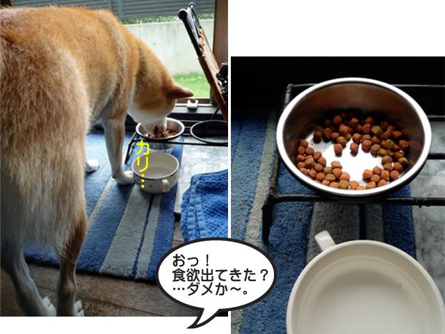 4日ブログ6.jpg