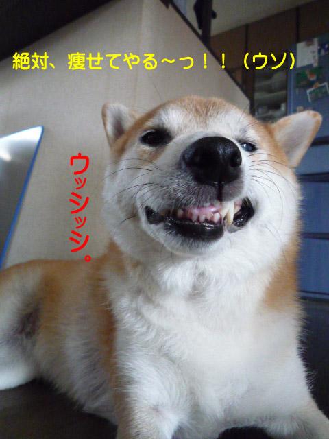 7日ブログ11.jpg
