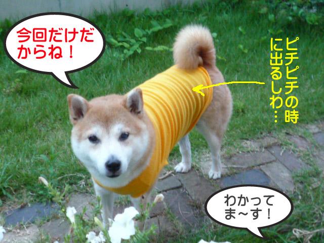 7日ブログ9.jpg
