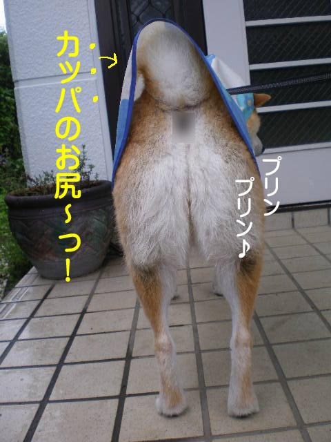 26日ブログ12.jpg
