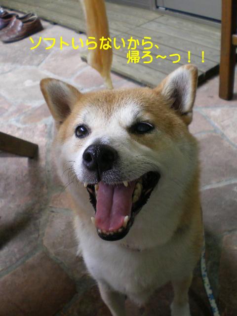 11日ブログ11.jpg
