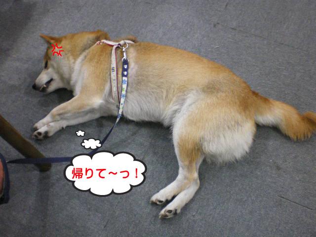 12日ブログ14.jpg