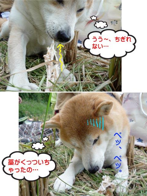 13日ブログ10.jpg