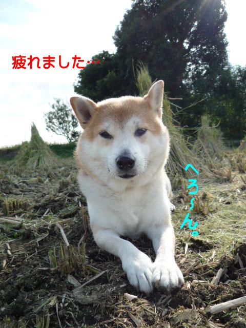 13日ブログ8.jpg