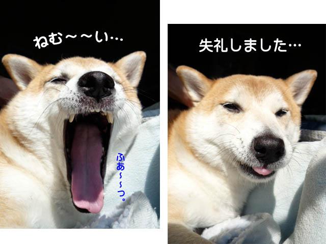 15日ブログ2.jpg