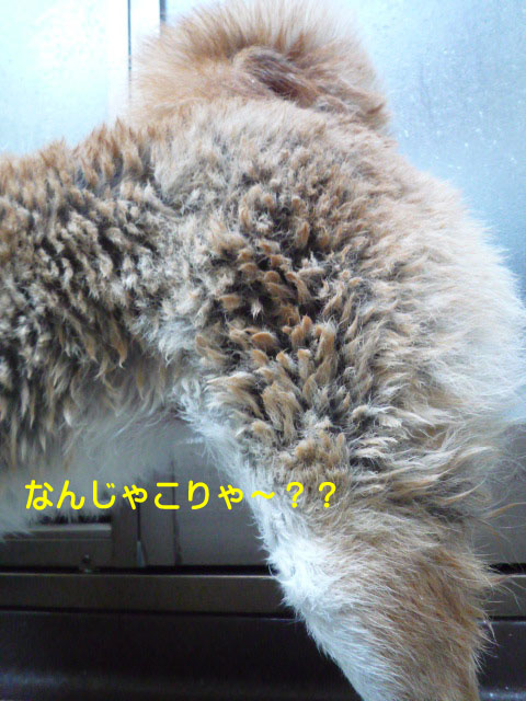 17日ブログ12.jpg
