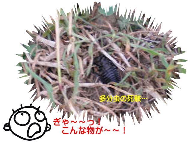 26日ブログ8.jpg