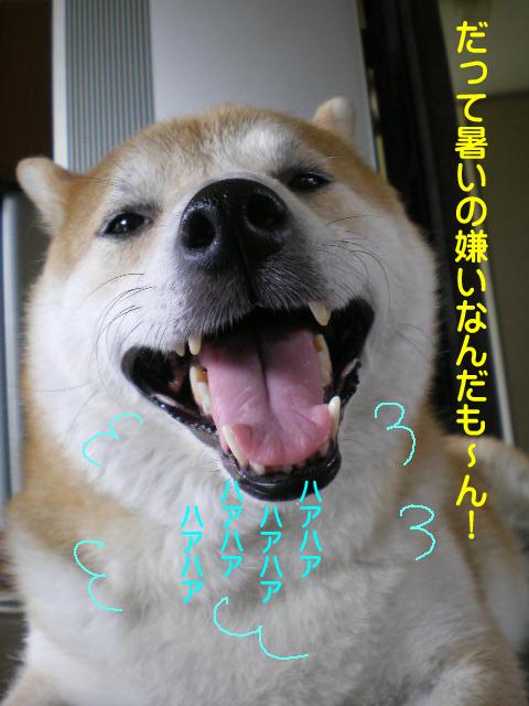 5日ブログ5.jpg
