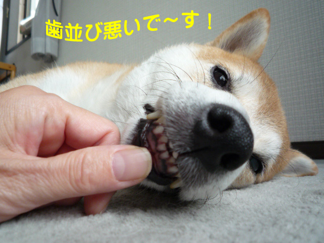 8日ブログ1.jpg