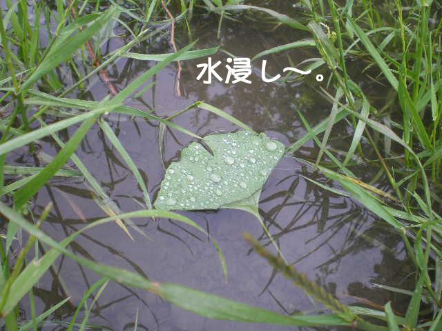 20日ブログ4.jpg